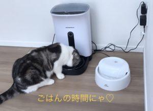 食事中のネコ