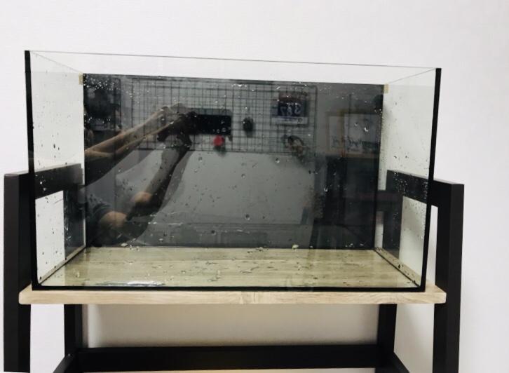 バックスクリーンを貼った水槽