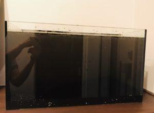 濁った水槽