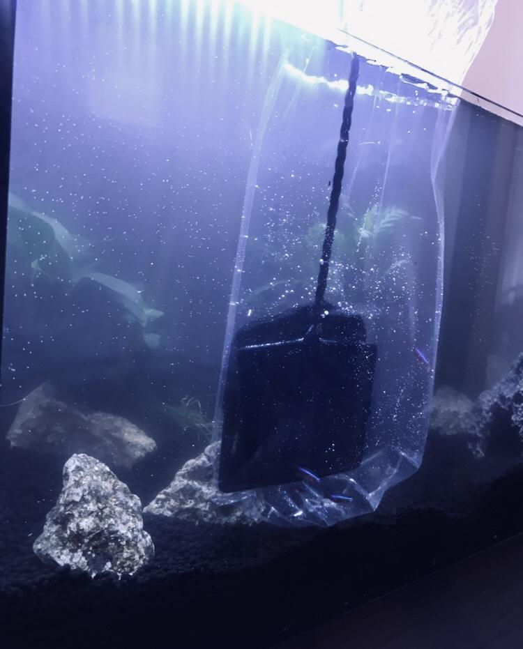 網で魚をすくう