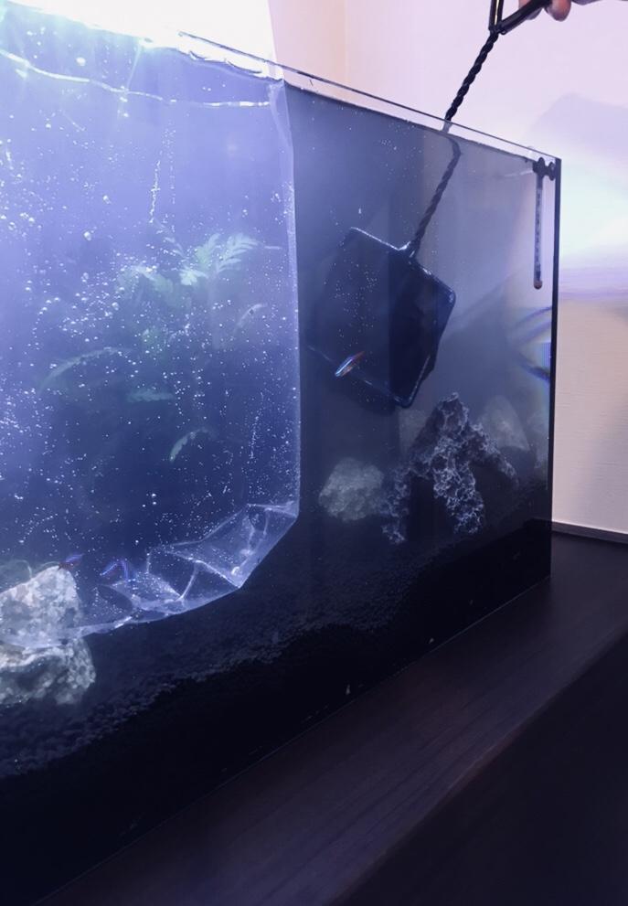 魚を水槽に入れる