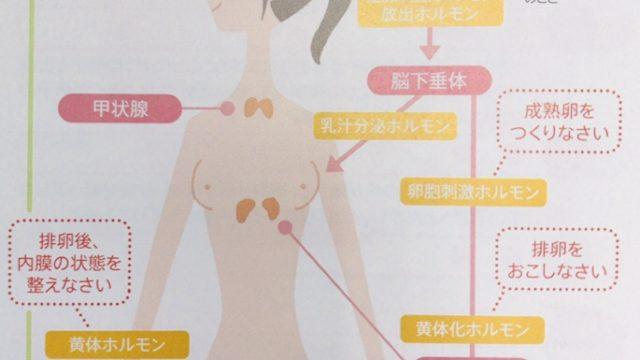 妊娠とホルモンの関係