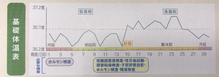 基礎体温グラフ2